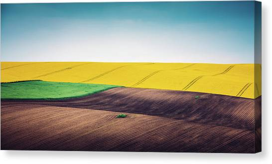Multi Colored Panoramic Spring Field Canvas Print by Borchee