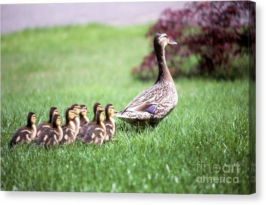 Ducks Canvas Print - Mumma Duck And Kids by King Wu