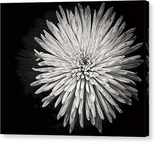 Canvas Print featuring the photograph Mum's The Word by Kristi Swift