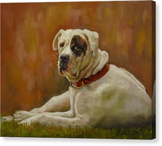 Munson An American Bull Dog Canvas Print by Nora Sallows