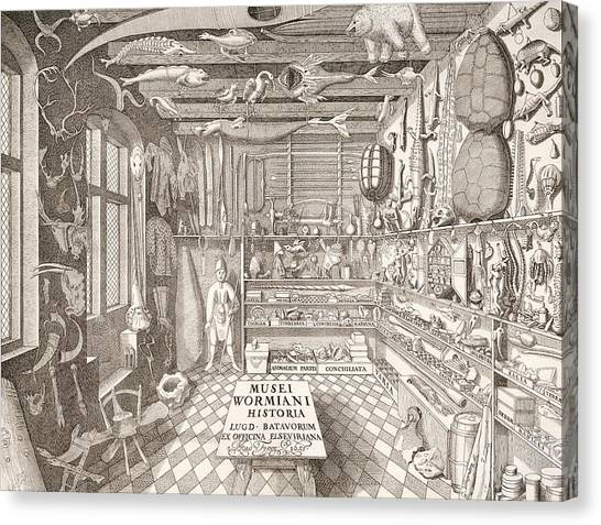 Carcass Canvas Print - Museum Of Ole Worm, Leiden, 1655 Engraving by G. Wingendorp