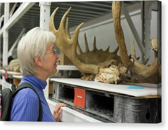 University Of Utah Canvas Print - Museum Visitor With Moose Antlers by Jim West