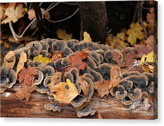 Mushroom Log Canvas Print