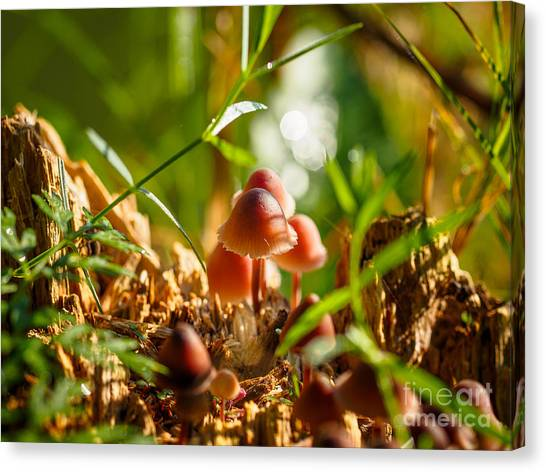 Mushrooms On A Decaying Stump Canvas Print