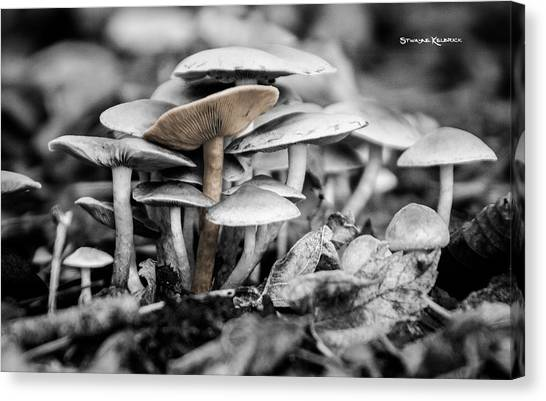 Canvas Print featuring the photograph Mushrooms by Stwayne Keubrick