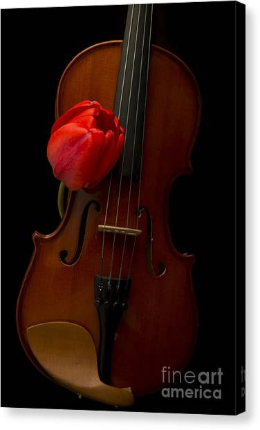 Fiddles Canvas Print - Music Lover by Edward Fielding