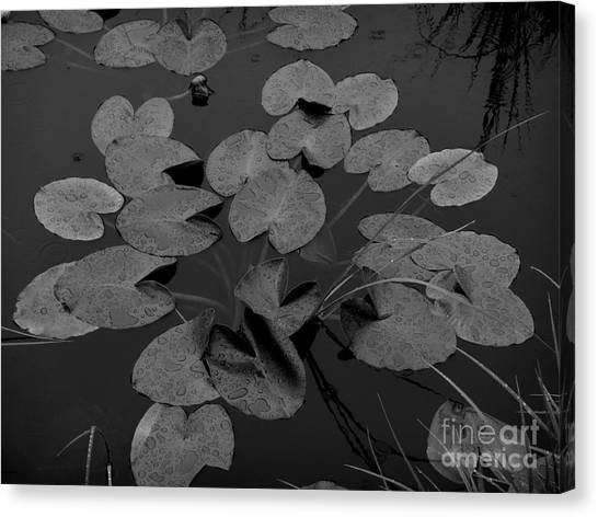 Canvas Print featuring the photograph Muskeg Pond by Laura  Wong-Rose