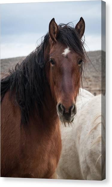 Mustang Beauty  Canvas Print
