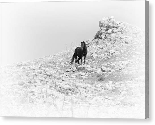 Mustang On Hill 2 Bw Canvas Print