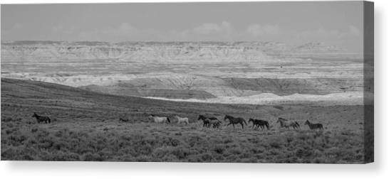 Mustangs Of The Adobe Canvas Print