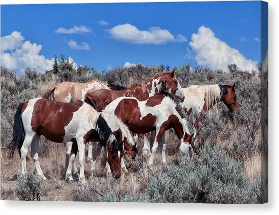 Red Dun Horse Canvas Print - Mustangs On South Steens by Kathleen Bishop