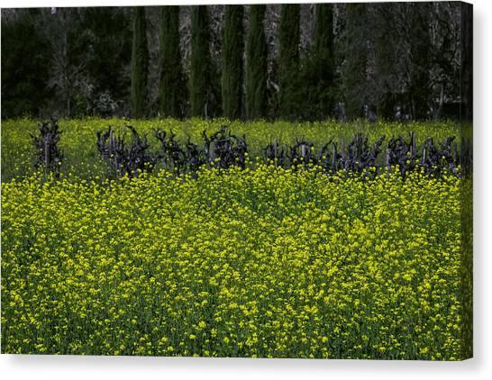Mustard Canvas Print - Mustard Grass In An Old Vineyard by Garry Gay