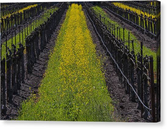 Mustard Canvas Print - Mustard Grass In Vineyards by Garry Gay
