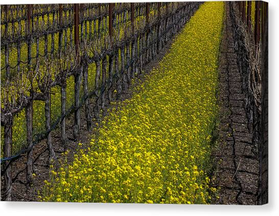 Mustard Canvas Print - Mustrad Grass In The Vineyards by Garry Gay