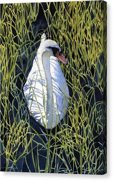 Swans Canvas Print - Mute Swan by Heidi Gallo