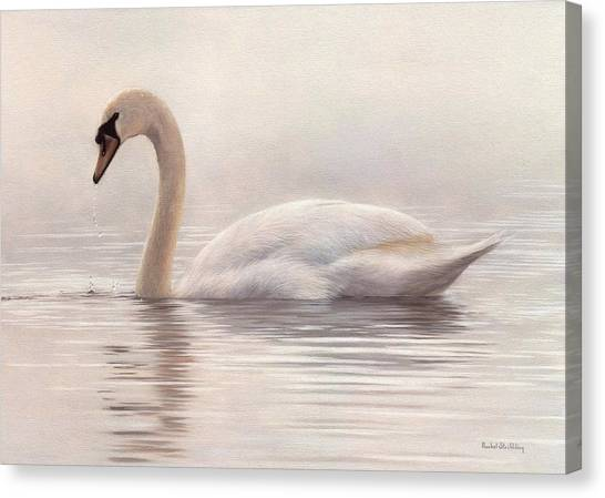 Mute Swan Painting Canvas Print