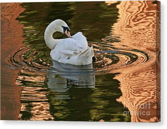 Canvas Print featuring the photograph Preening by Kate Brown