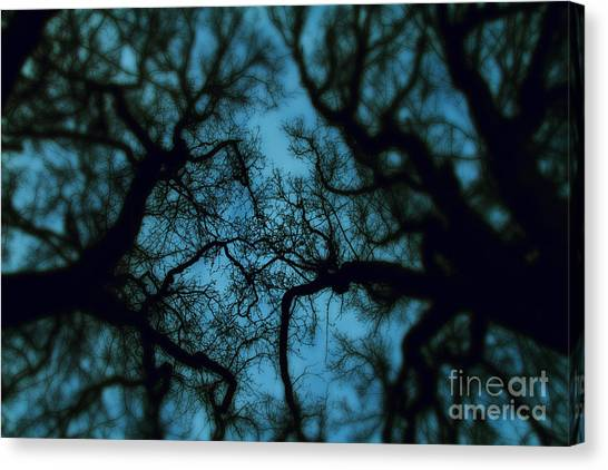 Foggy Forests Canvas Print - My Blue Dark Forest by Stelios Kleanthous