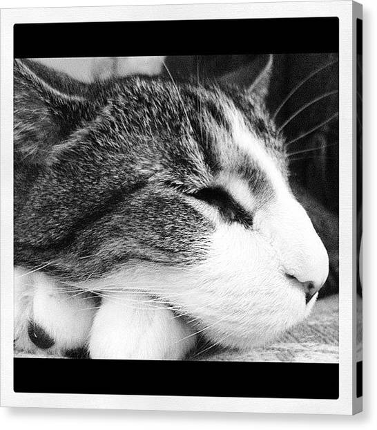 White Canvas Print - My Buddy by Mike Maher