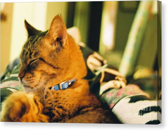 My Cat Canvas Print by Debbie Wells