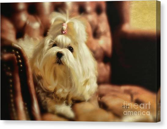 White Maltese Canvas Print - My Chair by Lois Bryan