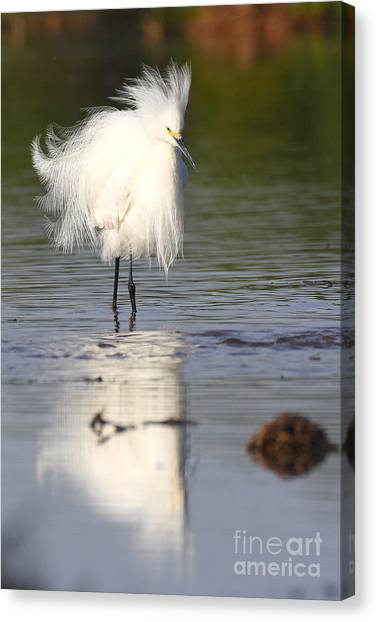My Feathers Are All Poofy Canvas Print