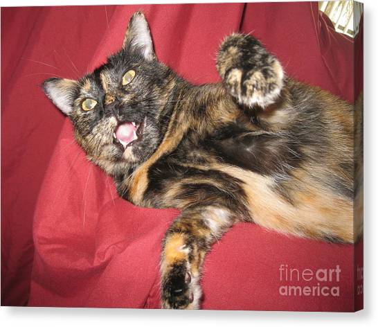 My Funny Cat Canvas Print