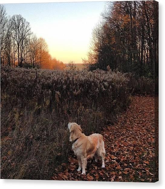 Golden Retrievers Canvas Print - My Girl Being A Weirdo #dog #pet #jesse by Krista Duke