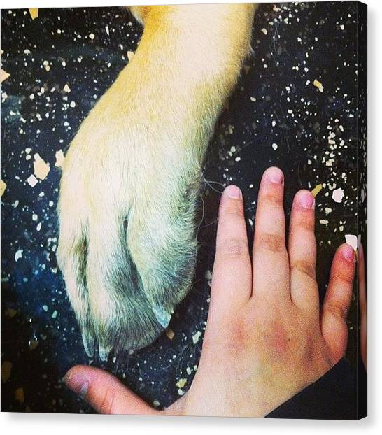 Mastiffs Canvas Print - My Hand Compared To His Foot by Stephanie Johnson