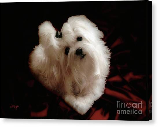 White Maltese Canvas Print - My Heart My Muse by Lois Bryan