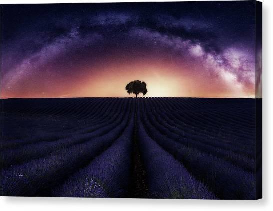 Cosmos Flower Canvas Print - My Lavander by Jorge Ruiz Dueso