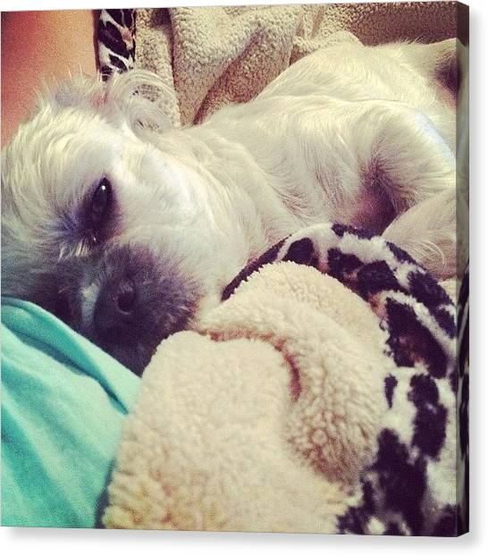 Ivory Canvas Print - My #mcm Is No Other Than My Cuddle Baby by Ivory Baldwin