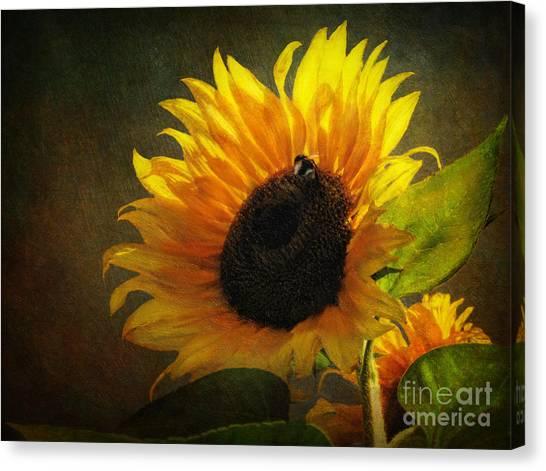 ...my Only Sunshine Canvas Print