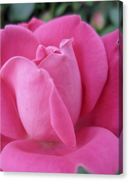 My Rose Canvas Print