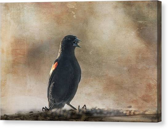 Blackbirds Canvas Print - My Stash by Susan Capuano