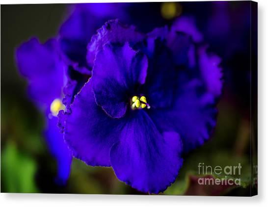 Kappa Sigma Canvas Print - My Violet I by Tamyra Ayles