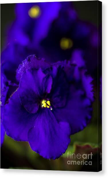 Kappa Sigma Canvas Print - My Violet II by Tamyra Ayles