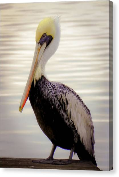 Pelican Canvas Print - My Visitor by Karen Wiles