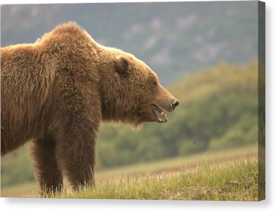 My What Big Teeth You Have  Canvas Print