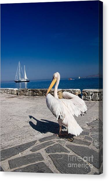 Greece Canvas Print - Mykonos Pelican by David Smith
