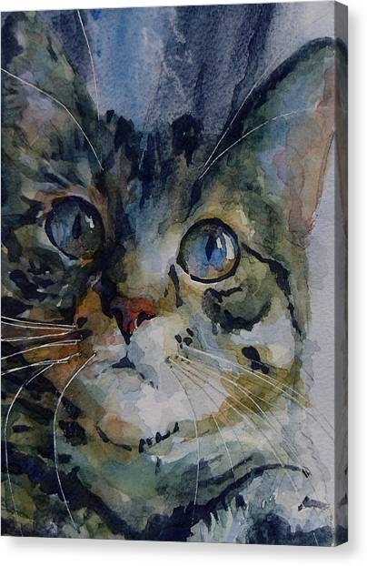 Kitten Canvas Print - Mystery Tabby by Paul Lovering