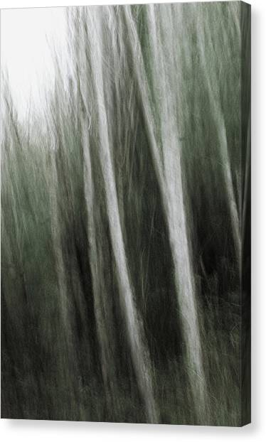 Mystic Forest Canvas Print by Kim Lessel