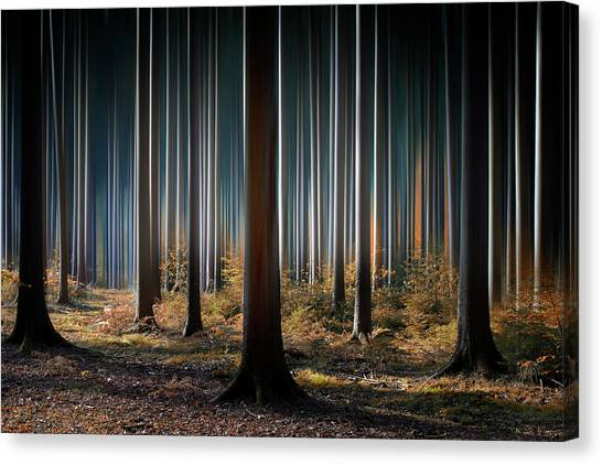 Tree Trunks Canvas Print - Mystic Wood by Carsten Meyerdierks