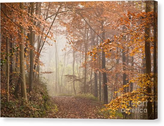 Murky Canvas Print - Mystic Woods by Anne Gilbert