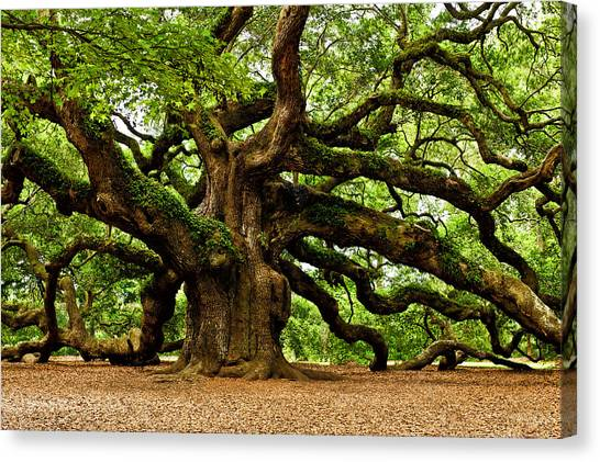 South Carolina Canvas Print - Mystical Angel Oak Tree by Louis Dallara