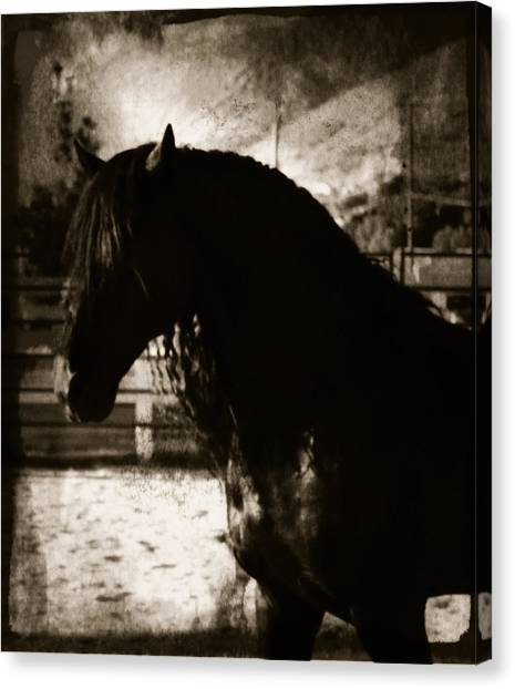 Mystical Friesian Canvas Print