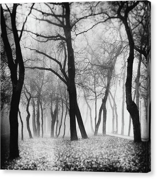 Bench Canvas Print - Mystique by Marchevca Bogdan