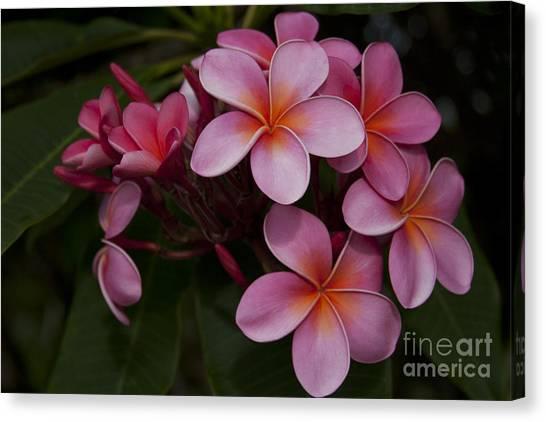 Na Lei Pua Melia O Wailua - Pink Tropical Plumeria Hawaii Canvas Print