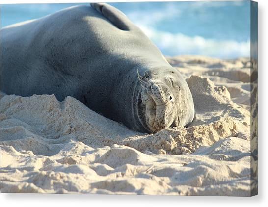 Bases Canvas Print - Naive Hawaiian Monk Seal by Michael Kim