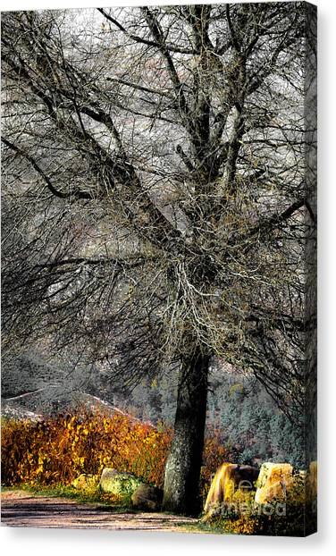 Naked For The Winter Canvas Print